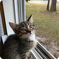 Adopt A Pet :: Mac - Wilmington, NC