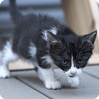 Adopt A Pet :: Leota - oklahoma city, OK