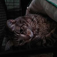 Adopt A Pet :: Elfa - Maryville, TN
