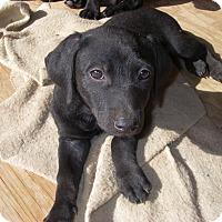 Adopt A Pet :: Angel - Buchanan Dam, TX