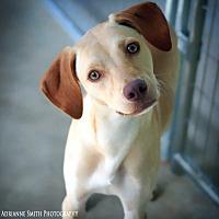 Adopt A Pet :: Nala - Barnesville, GA