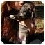 Photo 3 - Labrador Retriever Mix Puppy for adoption in Thomaston, Georgia - Syd