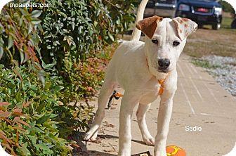 Labrador Retriever/Hound (Unknown Type) Mix Puppy for adoption in Danielsville, Georgia - Sadie