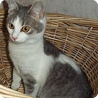 Adopt A Pet :: April - Brookville, IN