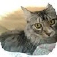 Adopt A Pet :: Petra - Vancouver, BC
