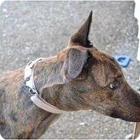 Adopt A Pet :: Petey (Petro McPetey) - Chagrin Falls, OH