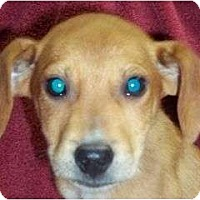 Adopt A Pet :: Dansby Reduced - Plainfield, CT