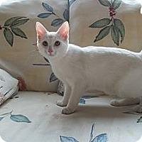 Adopt A Pet :: Gabby - Acme, PA