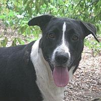 Adopt A Pet :: Avon - Portland, ME