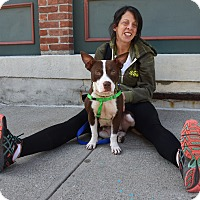 Adopt A Pet :: Winona Ryder - Jersey City, NJ