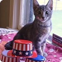 Adopt A Pet :: Emmy - Independence, MO