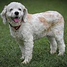Adopt A Pet :: Missie