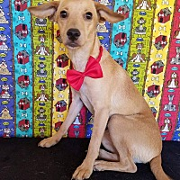Adopt A Pet :: Howie - Pluckemin, NJ