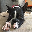 Adopt A Pet :: Astrid (Has Application)
