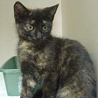 Adopt A Pet :: Olivia - Germansville, PA