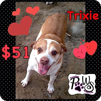 Pit Bull Terrier/Terrier (Unknown Type, Medium) Mix Dog for adoption in Fowler, California - Trixie