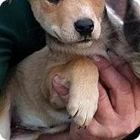 Adopt A Pet :: Meadow - Gainesville, FL