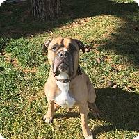 Adopt A Pet :: Sancho - Las Vegas, NV
