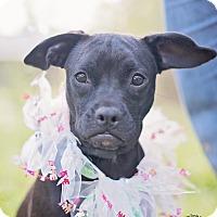 Adopt A Pet :: Betty - Kingwood, TX