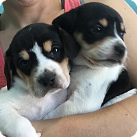 Adopt A Pet :: Leia and Laurel - urgent - Providence, RI