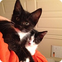 Adopt A Pet :: Lily Ann (MO) Adoption Pending - Trenton, NJ