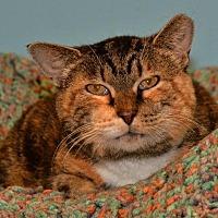 Adopt A Pet :: Linda - Cincinnati, OH