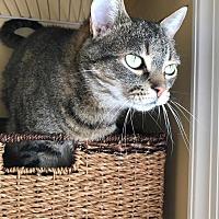 Adopt A Pet :: Paisley - Carlisle, PA