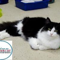 Adopt A Pet :: Clayton - Belleville, MI