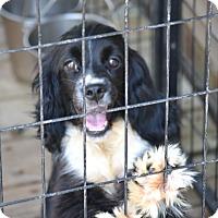 Adopt A Pet :: Oscar - Pikeville, MD