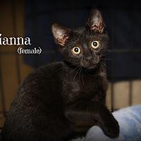 Adopt A Pet :: Tianna - Springfield, PA
