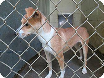 Terrier (Unknown Type, Medium) Mix Dog for adoption in Henderson, North Carolina - Piper