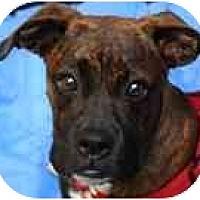 Adopt A Pet :: Jade - North Haven, CT