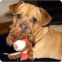 Adopt A Pet :: Mars - Poway, CA