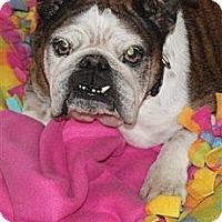 Adopt A Pet :: Hilda - Winder, GA