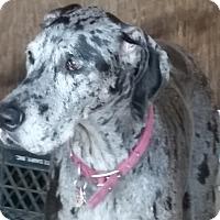 Adopt A Pet :: Sierra - Jupiter, FL