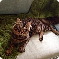 Adopt A Pet :: Pancho - Arlington, VA