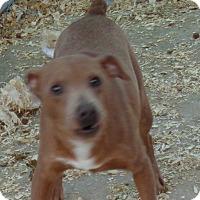 Adopt A Pet :: Bennie - Crump, TN