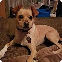Adopt A Pet :: Nina - Pinellas Park, FL
