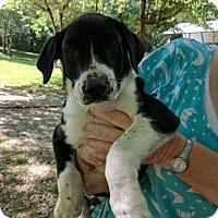 Adopt A Pet :: June Bug - Hohenwald, TN