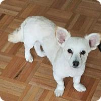 Adopt A Pet :: Tony! - New York, NY