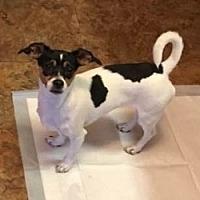 Adopt A Pet :: Godiva - Mesa, AZ