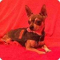 Adopt A Pet :: Carlos - Colorado Springs, CO