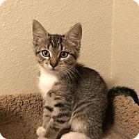 Adopt A Pet :: Fern (Fostered Jamie O) - Troy, IL