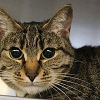 Adopt A Pet :: Snooki - Sarasota, FL