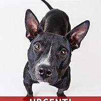 Adopt A Pet :: Bingo - Decatur, GA