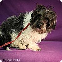 Adopt A Pet :: April - Broomfield, CO