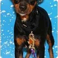 Adopt A Pet :: Tyson - Gilbert, AZ