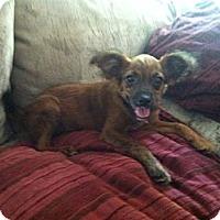 Adopt A Pet :: Sebastian - Shirley, NY