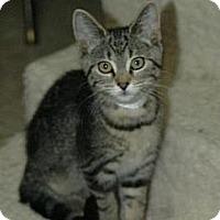 Adopt A Pet :: Tiger Lily - Grand Rapids, MI