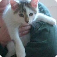 Adopt A Pet :: Lenny - Kensington, MD